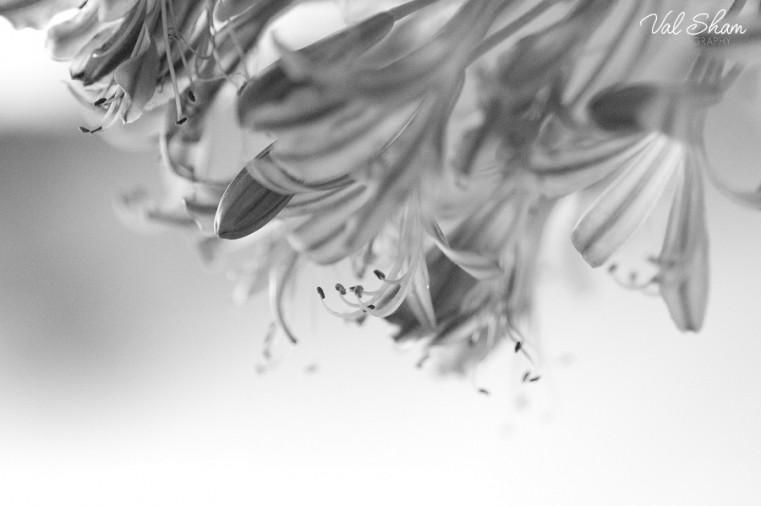 Val Sham Photography-Liz Birthday_008